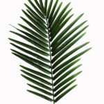 artificial-leaf-palm-tree-palm-leaves-palm-spray-jtle-001-jpg-lgcw0c-clipart
